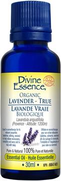 Picture of  Lavender True (Provence-1200m)