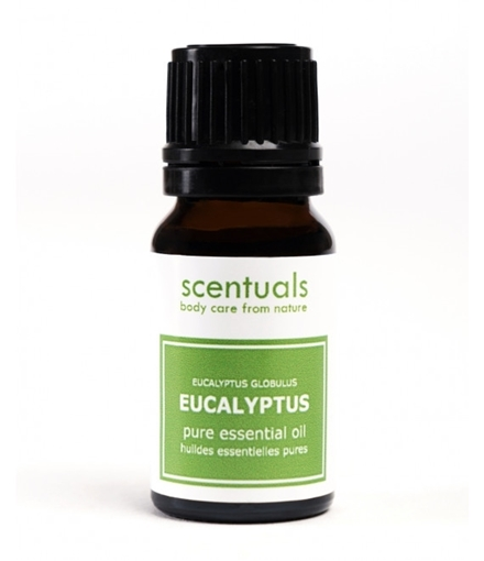 Picture of Scentuals Scentuals Pure Essential Oil, Eucalyptus 10ml