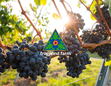 Picture of  Frogpond Farm Organic Winery Tasting Experience